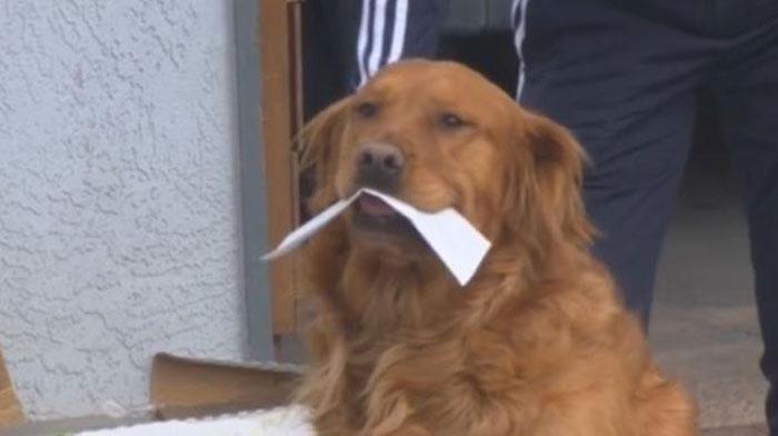 Anjing Kirim Makanan