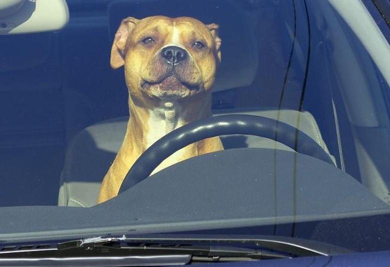 Ilustrasi anjing menyetir