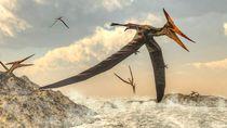 Kabar Gembira, 3 Spesies Baru Dinosaurus Terbang Ditemukan di Maroko