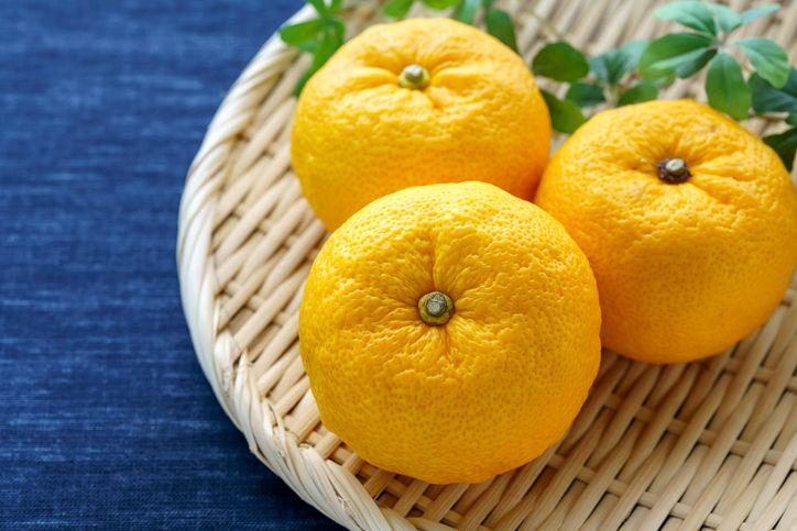 Japanese citron 'Yuzu' fruits isolated on light background