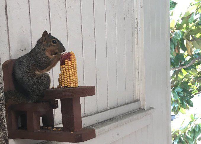 Piknik Tupai