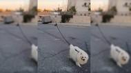 Drone Dipakai Buat Ajak Anjing Jalan-jalan Saat Wabah Corona