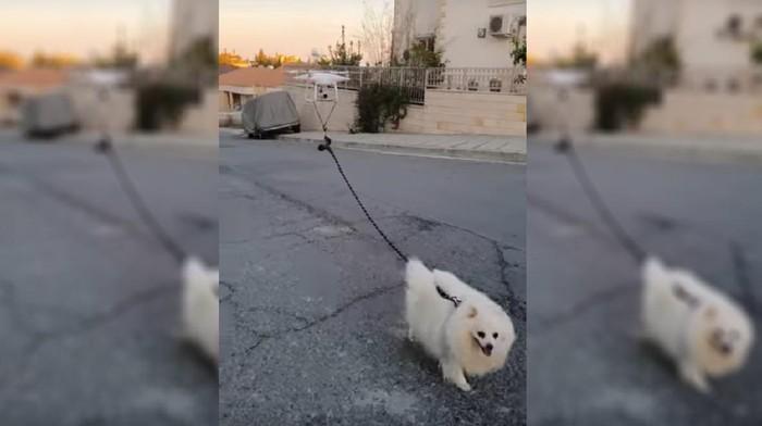Drone Untuk Anjing Jalan-jalan saat wabah corona