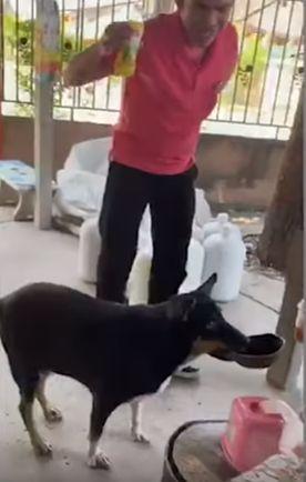 Tidak suka makanan biasa, anjing pintar ini paling suka menyantap makanan dari restoran. Setiap harinya anjing imut ini selalu membawa batok kelapa ke restoran.