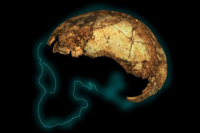 Tempurung kepala batita dari fosil tertua di zaman Homo Erectus ditemukan di Afrika Selatan. Fosil ini berusia sekitar 2,04-1,95 juta tahun lalu.Ditemukan fakta, manusia purba ini memiliki otak lebih kecil dari manusia sekarang, namun ia sudah dapat berjalan tegak dan merupakan yang manusia pertama yang menjelajah keluar Afrika untuk menetap di belahan dunia lain, bahkan sampai ke Asia.