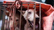 Shenzhen Kota Pertama di China yang Larang Konsumsi Anjing dan Kucing