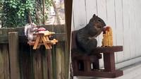 Karena Gabut, Pria Ini Bikin Meja Piknik Isi Makanan Untuk Tupai