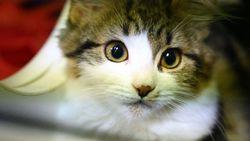 Shenzhen Jadi Kota Pertama di China yang Larang Santap Daging Anjing-Kucing
