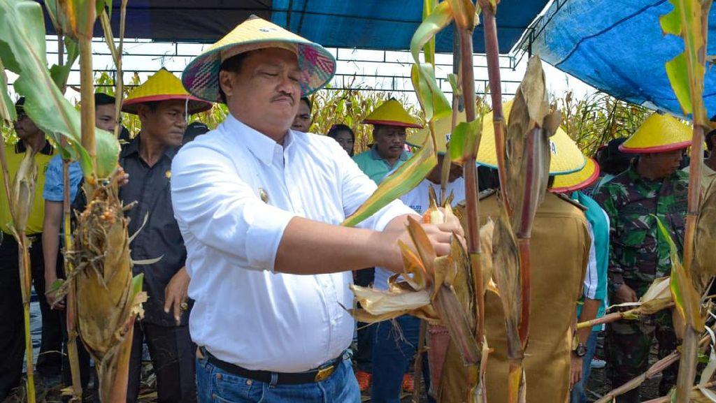 Bupati Morut Sulteng Dimakamkan Sesuai Protap Corona