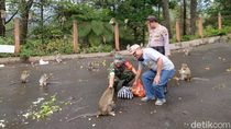 Wisata Ditutup, Relawan Beri Makan Ratusan Monyet Grojogan Sewu