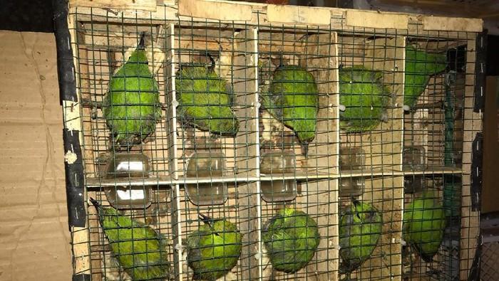 Burung yang diselundupkan dari Riau menuju Jambi