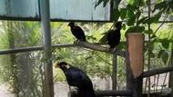 Tempat Melihat Aneka Burung di Malaysia