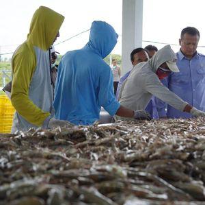KKP Estimasi Panen Perikanan April-Juni Capai 450 Ribu Ton