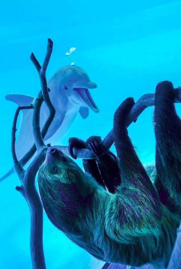 Semenjak menutup menerima pengunjung, Texas State Aquarium membiarkan para hewan berkeliling kebun binatang. (Texas State Aquarium/Facebook)