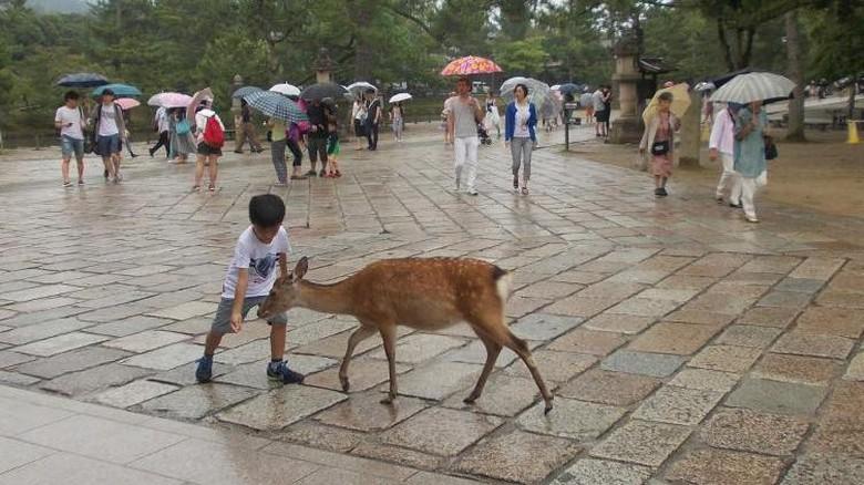 Rusa-rusa suci di Nara Deer Park, Nara, Jepang