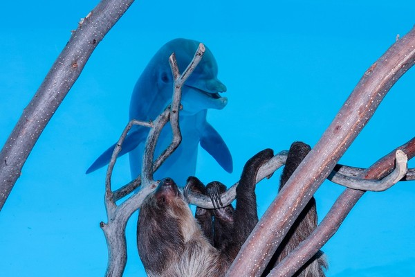 Chico pun bermain ke akuarium yang terdapat lumba-lumba di dalamnya. (Texas State Aquarium/Facebook)