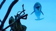 Girangnya Lumba-lumba Bertemu Kungkang
