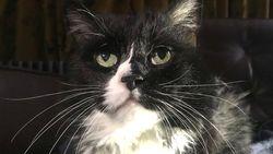 Haruskah Kucing dan Anjing Peliharaan Tetap di Rumah Agar Tak Tertular Corona?