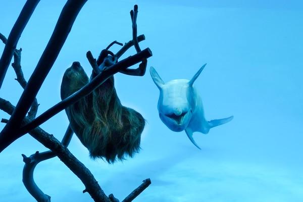 Salah satunya adalah kungkang bernama Chico ini. (Texas State Aquarium/Facebook)