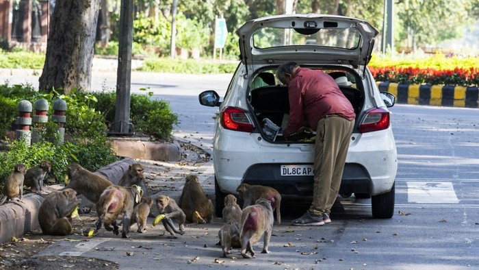 A man feeds monkeys at a street during a government-imposed nationwide lockdown as a preventive measure against the spread of the COVID-19 coronavirus in New Delhi on April 2, 2020. (Photo by Jewel SAMAD / AFP)