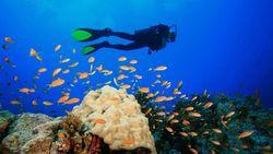 KKP Selesaikan 7 Kasus Kerusakan Laut dengan Klaim Rp 44 M Lebih