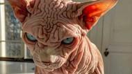 Kenalan dengan Selebgram Xherdan Si Kucing Bugil