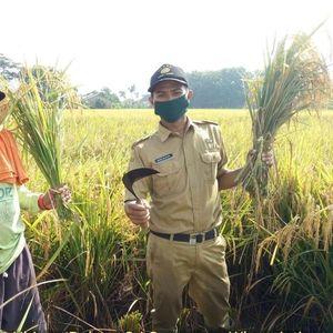 Jaga Lahan Pertanian, 36.052 Hektare Sawah Bakal Masuk Perda LP2B
