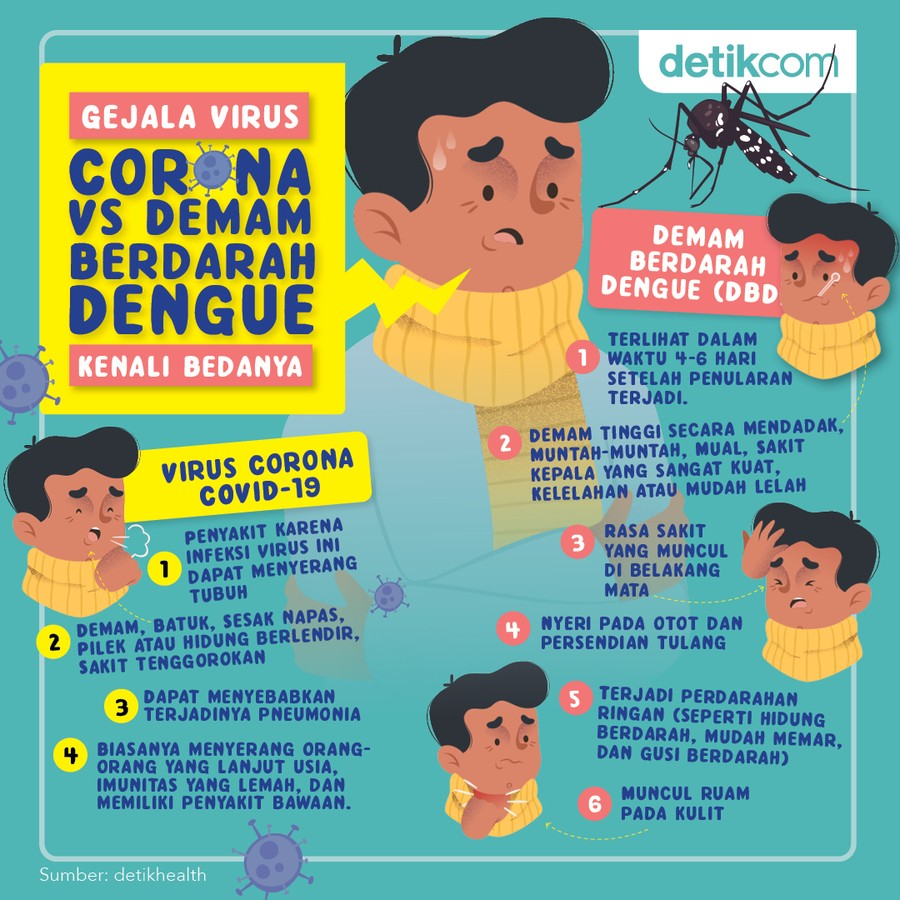 virus corona vs demam berdarah dengue infografis