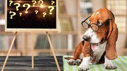 Sttt Dengar Deh! Ini Cara Cari Tahu Arti Gonggongan Anjing