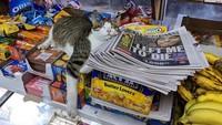 Gemas! Twitter Ini Isinya Foto Kucing Nongkrong di Supermarket