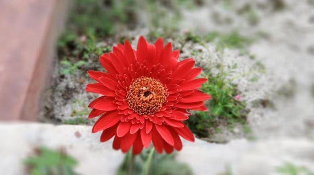 Bagian-bagian Bunga dan Cirinya yang Bisa Dipelajari Siswa