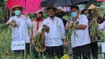 Panen Bawang Putih di Temanggung, Mentan: Aromanya Lebih Sedap