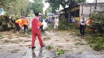 Pohon Tumbang Timpa 2 Mobil di Solo, Lalu Lintas Sempat Dialihkan