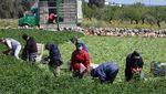 Petani Dunia Merajut Asa Bertahan di Tengah Wabah Corona