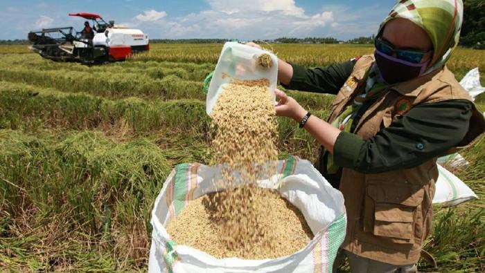 Petani padi di Kolaka Sultra melakukan panen dengan menerapkan imbauan cuci tangan untuk menghindari penularan virus Corona