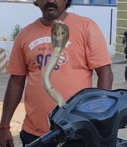 Ular kobra keluar dari batok kepala motor