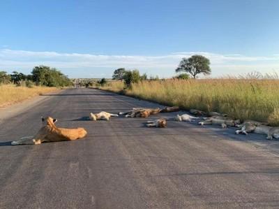Dua Sisi Corona untuk Hewan: Kembali ke Habitat atau Diburu