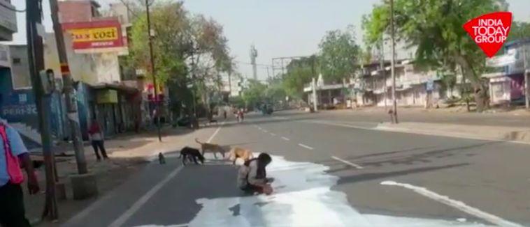 Pria mengais tumpahan susu di jalan