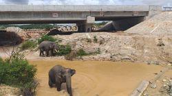 Jalan Tol untuk Gajah Ada di Sumatera Lho