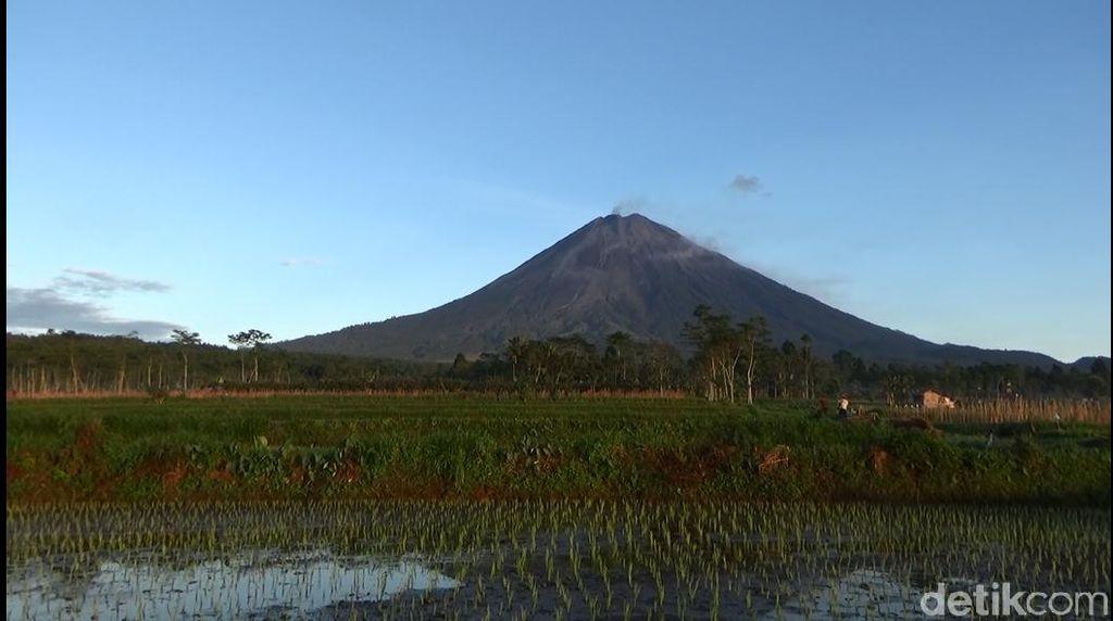 Aktivitas Vulkanik Gunung Semeru Menurun