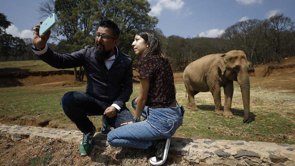 Kebun Binatang di Meksiko Jual Tiket Setengah Harga Demi Beli Makan Satwa