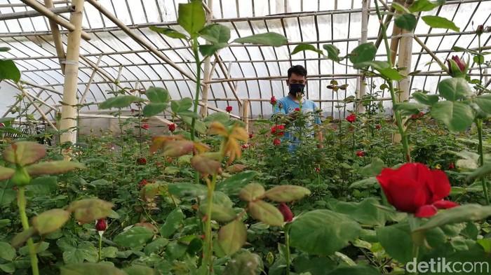 Pandemi COVID-19, Petani Bunga di Bandung Barat Kena Getahnya