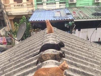 Kocak! Ketika Kucing dan Bebek Ikut-ikutan #jagajarakdulu