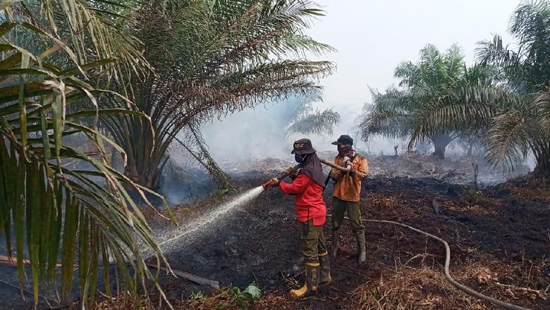 Sosok Kartini dari Manggala Agni, Selamatkan Hutan dari Kobaran Api