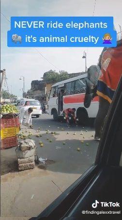 Aksi gajah curi buah di jalanan