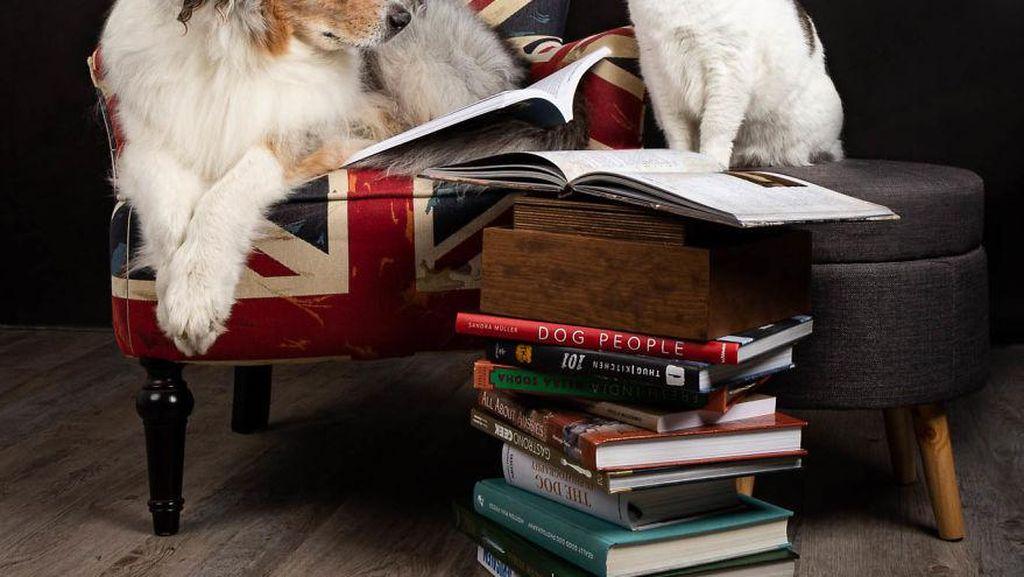 Bicara Kecerdasan Hewan, Anjing dan Kucing Pintar Mana Ya?