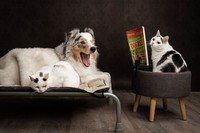 Potret Lucu Kehidupan Anjing dan Kucing Selama Lockdown