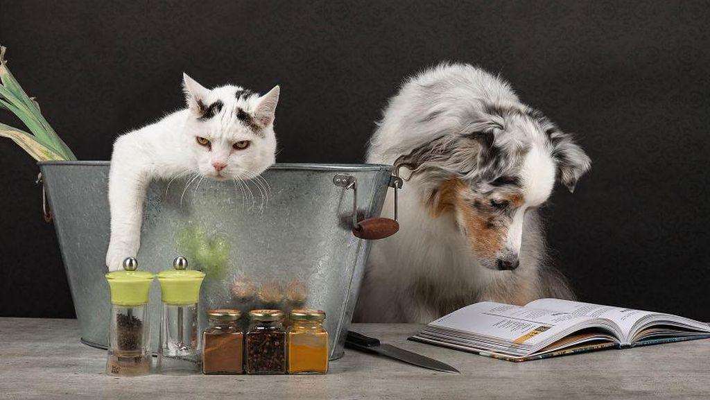 Penuhi Hal Ini Jika Mau Dianggap Pemilik Anjing Berakhlak