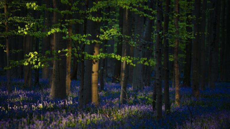 Hutan wisata di Belgia.