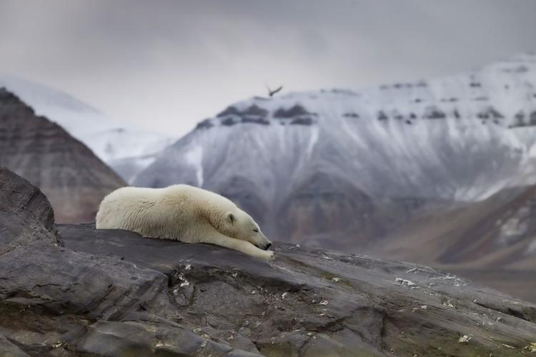 Memperingati Hari Bumi, Kontes foto Agora #ClimateChange2020 bertema tentang darurat iklim yang menyebabkan gangguan pada fauna, flora, ekosistem, dan manusia.